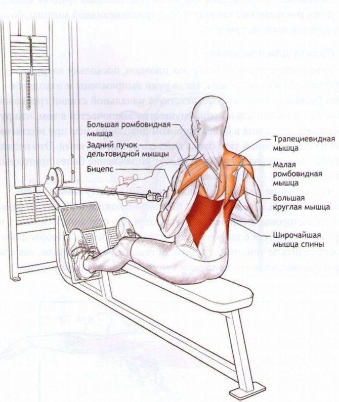 Вертикальный жим ногами: техника выполнения, ошибки и противопоказания