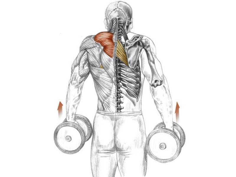 Комплексные упражнения на спину со штангой: правильная техника выполнения - tony.ru