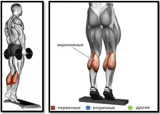 Подъем ног сидя – разбираем нюансы