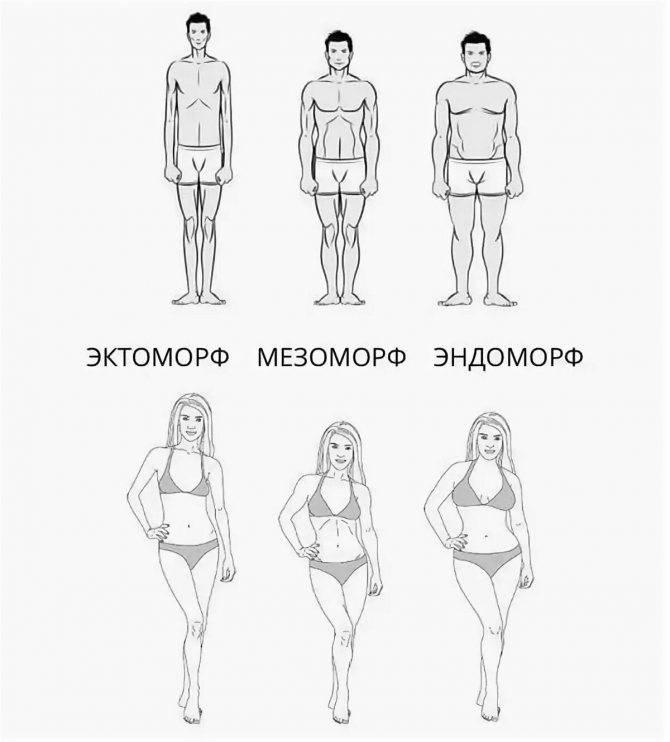 Мезоморф: основные характеристики и особенности тренинга