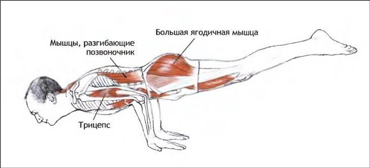 Упражнение ласточка какие мышцы работают
