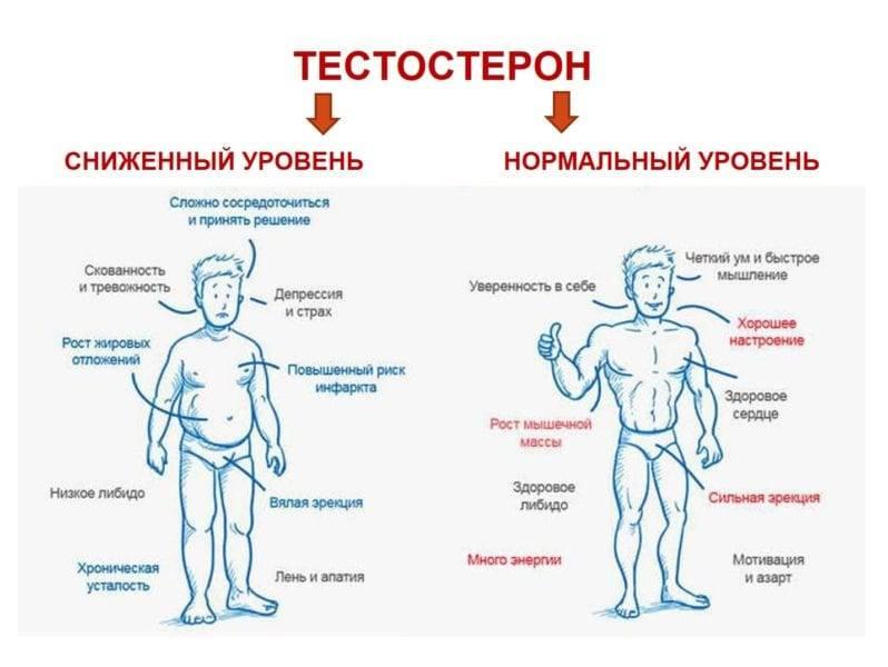 Как повысить уровень тестостерона?