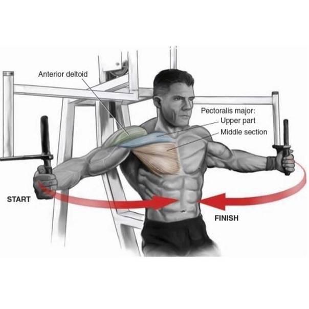 Обратные разведения рук на тренажере peck-deck (обратная бабочка): техника выполнения, описание упражнения, рекомендации.