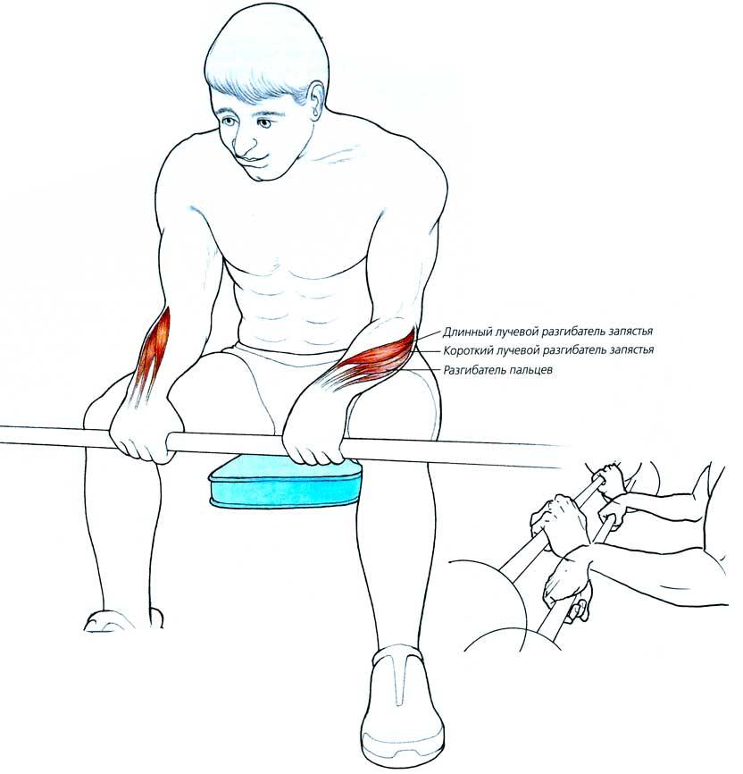 Как тренировать мышцы предплечья дома?