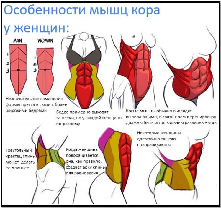 3 упражнения для улучшения осанки и укрепления кора