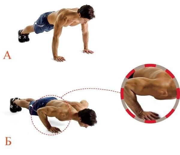 Программа отжимания от пола для начинающих, тренировка грудных мышц на массу