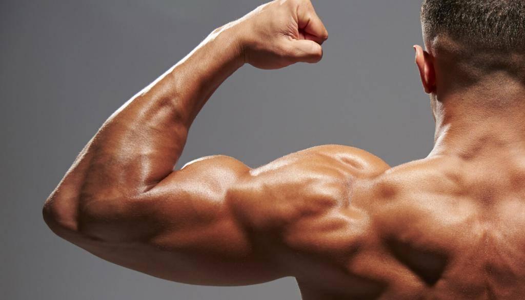 Почему не растут мышцы? | musclefit