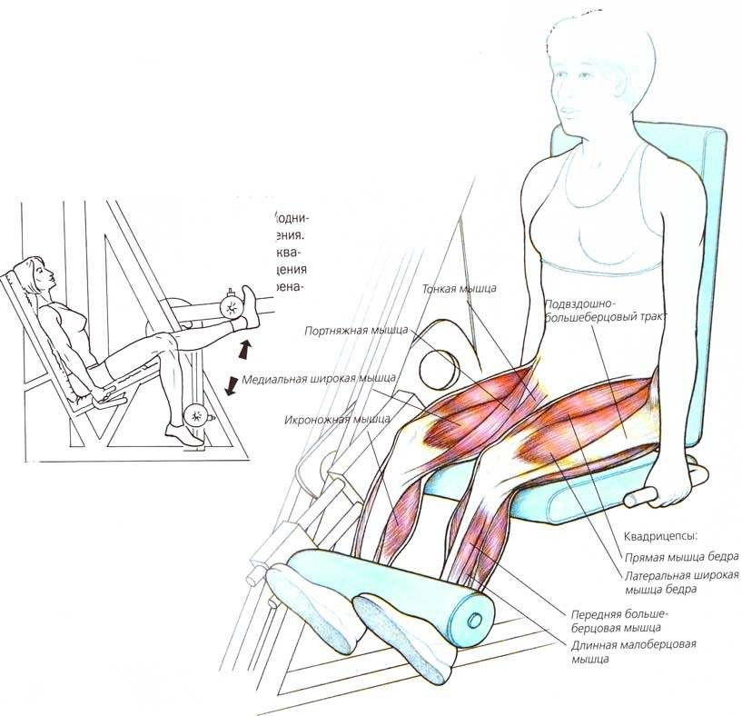 Разгибание ног в тренажере сидя упражнение для тренировки квадрицепса бедра [упражнение на квадрицепс]