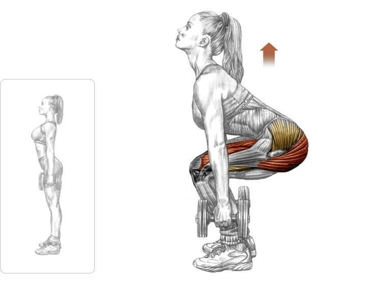 Приседания с гантелей: различные варианты, техника упражнений для мужчин и женщин, рекомендации