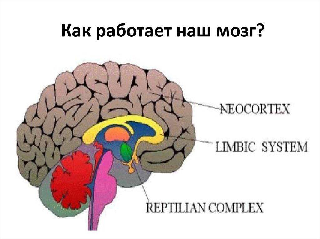 20 упражнений для развития мозга и улучшения памяти:тренировка для взрослых и детей