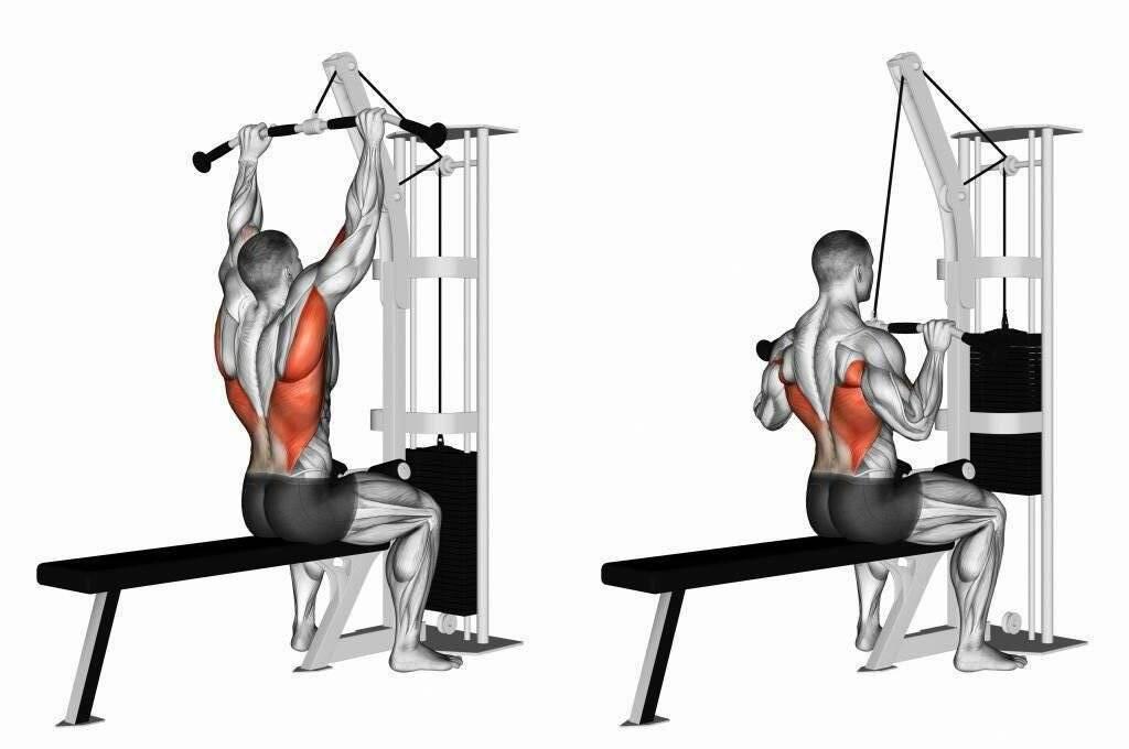Как накачать спину женщинам: 4 тренировочные программы. • bodybuilding & fitness