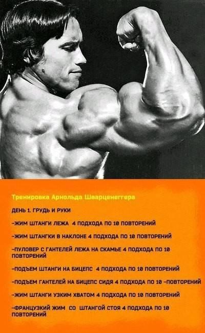 Тренировки арнольда шварценеггера: советы для груди и спины   бомба тело
