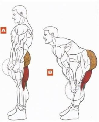 Румынская тяга- техники выполнения со штангой и гантелями
