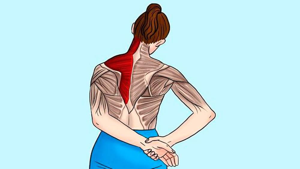 Растяжка мышц спины – эффективные, профилактические методы
