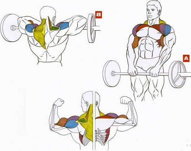 Топ лучших упражнений на плечи в домашних условиях