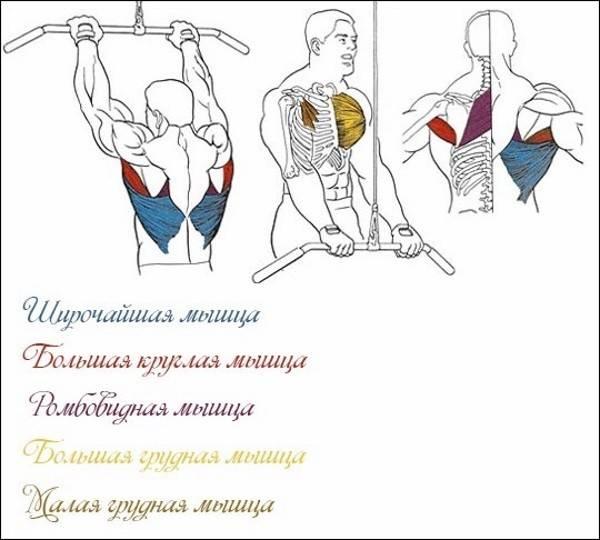 Как выполнять тягу рейдера и какие мышцы будут задействованы?