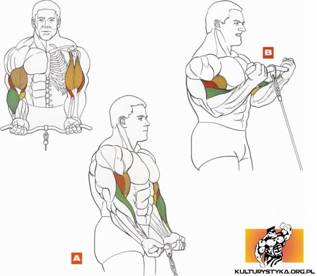 Как накачать большой бицепс без травм