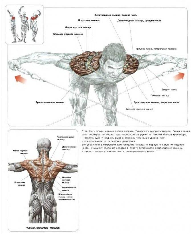 Тренировка плеч на массу: программа тренировок в тренажёрном зале