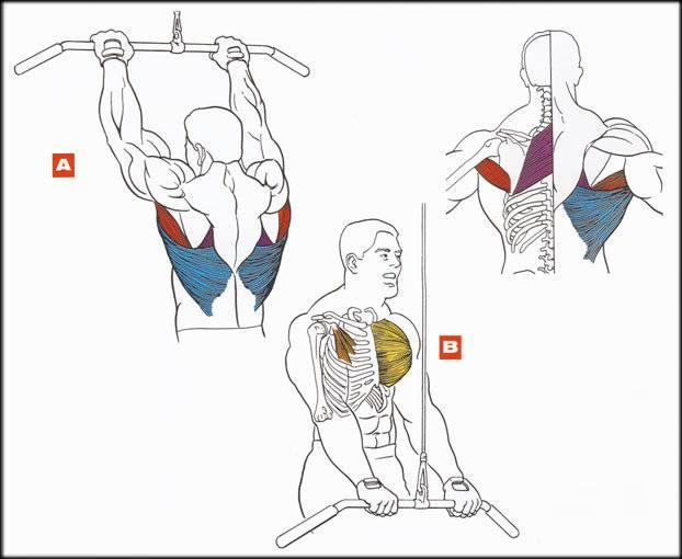 Тяга прямыми руками в кроссовере. как делать тягу верхнего блока прямыми руками и что она дает? тяга верхнего блока прямыми руками — техника выполнения