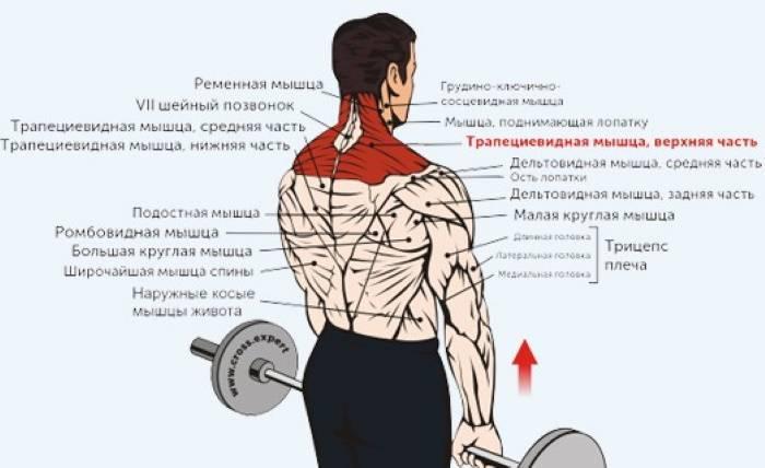 Лучшие упражнения для трапеции. полное руководство
