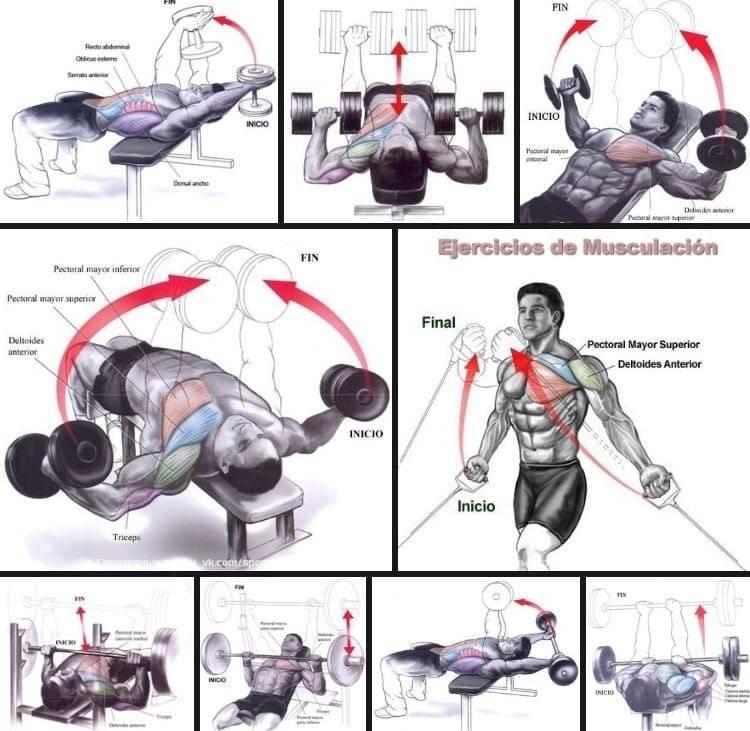 Накачать грудные мышцы в домашних условиях: лучшие упражнения