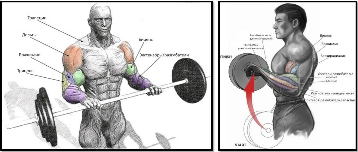 Как увеличить объем рук: программа упражнений на бицепс