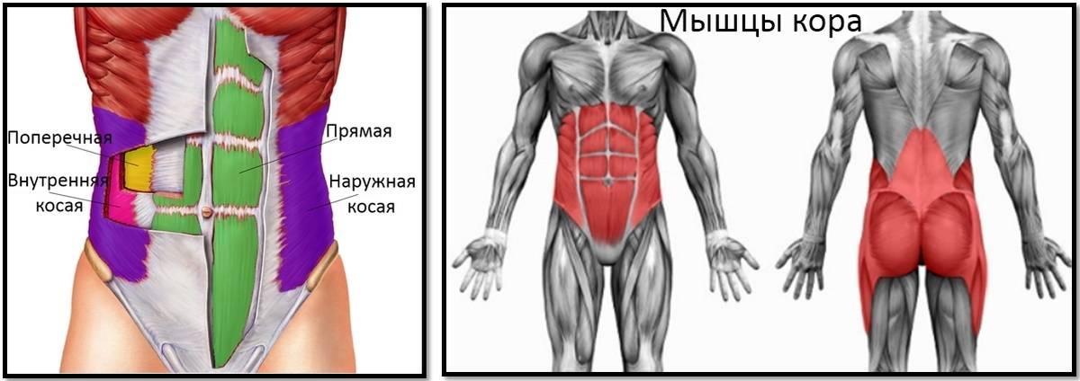 Мышцы кора. упражнения для укрепления