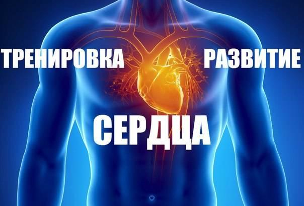 Тренировка сердца и развитие выносливости » спортивный мурманск
