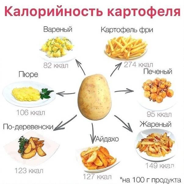 Калорийность картошки: жареной, вареной, тушеной, пюре и т.д