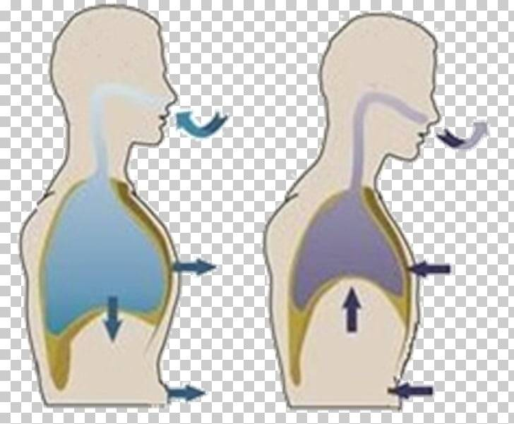 Правильное дыхание животом: польза, противопоказания и техника