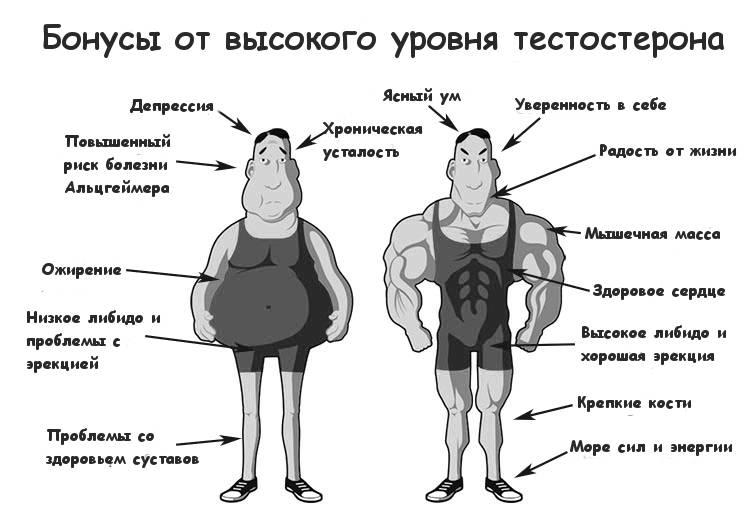 Как лечить дефицит тестостерона у больных сахарным диабетом ii типа