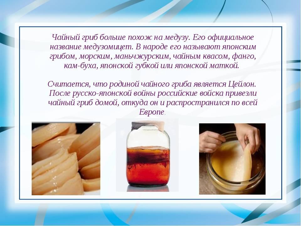 Чайный гриб - полезные свойства и противопоказания.