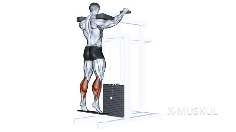 Подъем на носки стоя: описание упражнения, инструкция по выполнению