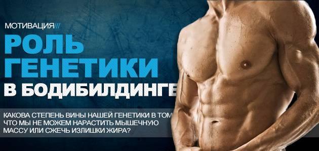 Важна ли генетика для занятия фитнесом и бодибилдингом? | power-body.ru