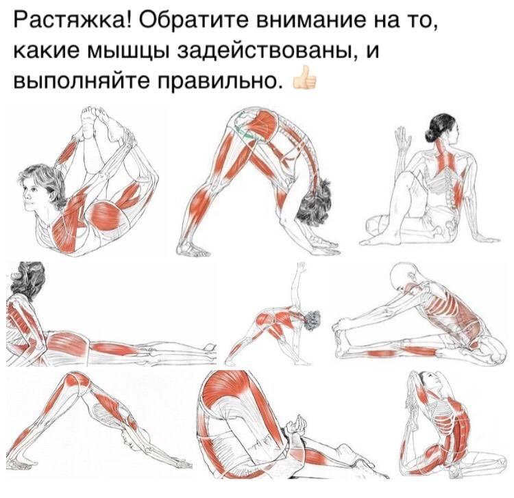 Стретчинг упражнения: ознакомиться с комплексом стретчинг тренировок на растяжку