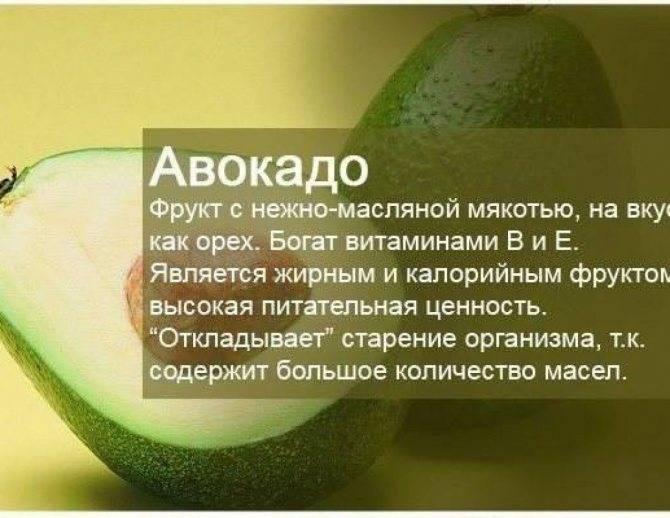 Авокадо: польза и вред для организма человека, женщины, мужчины, калорийность, как его едят