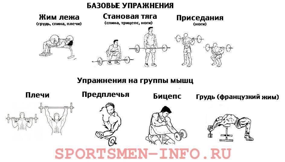 Программа тренировок для набора мышечной массы 3 раза в неделю: базовые комплексы упражнений
