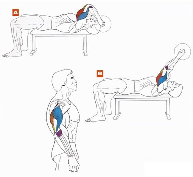 Как правильно качать трицепс? лучшие упражнения и план тренировок