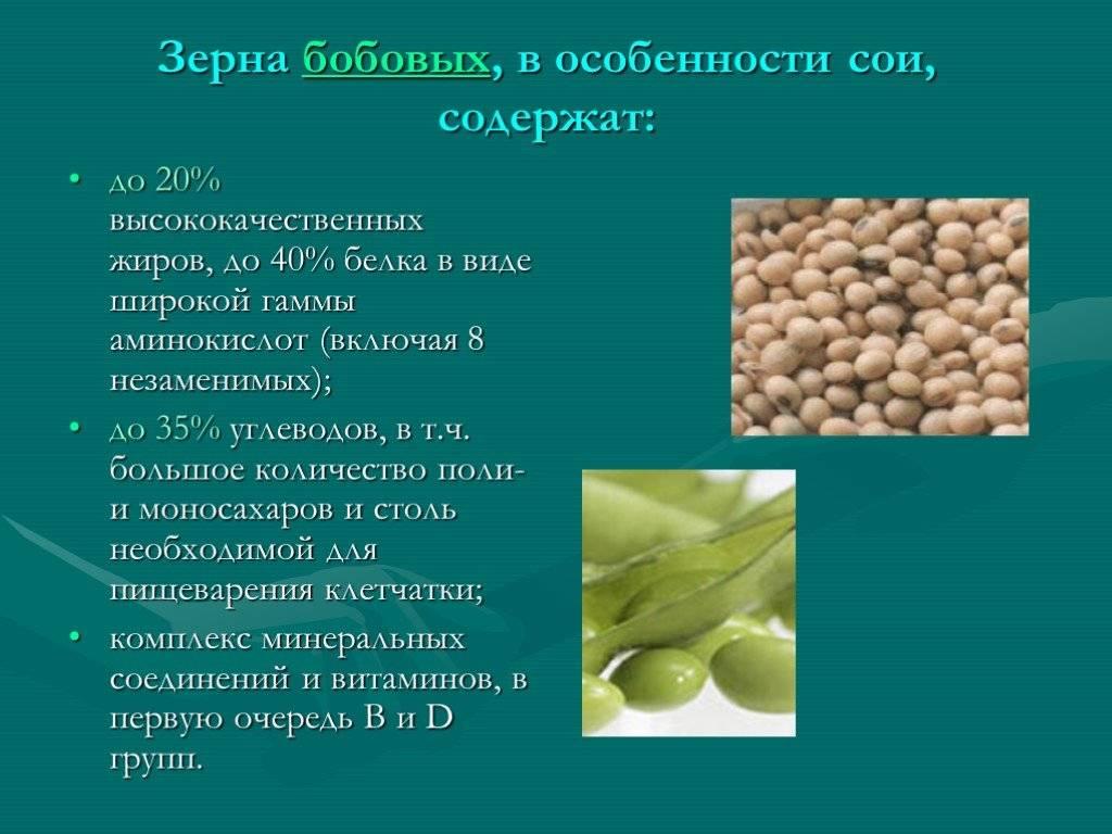 Соя: польза, вред и калорийность продукта   food and health