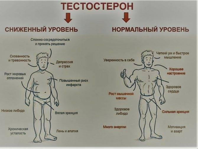 Тестостерон: как повысить содержание гормона в организме, механизмы воздействия