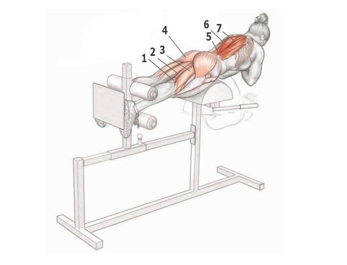 Гиперэкстензия: техника выполнения, как правильно делать гиперэкстензию