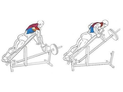 Тяга т грифа в наклоне: правильная техника и особенности упражнения