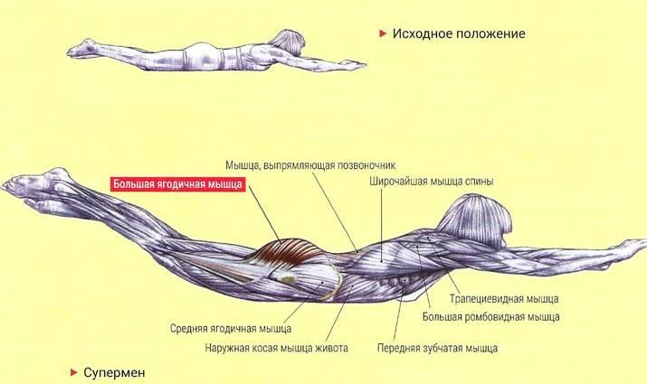 Упражнения для спины - в домашних условиях вылечить спину, натренировать мышцы, укрепить позвоночник