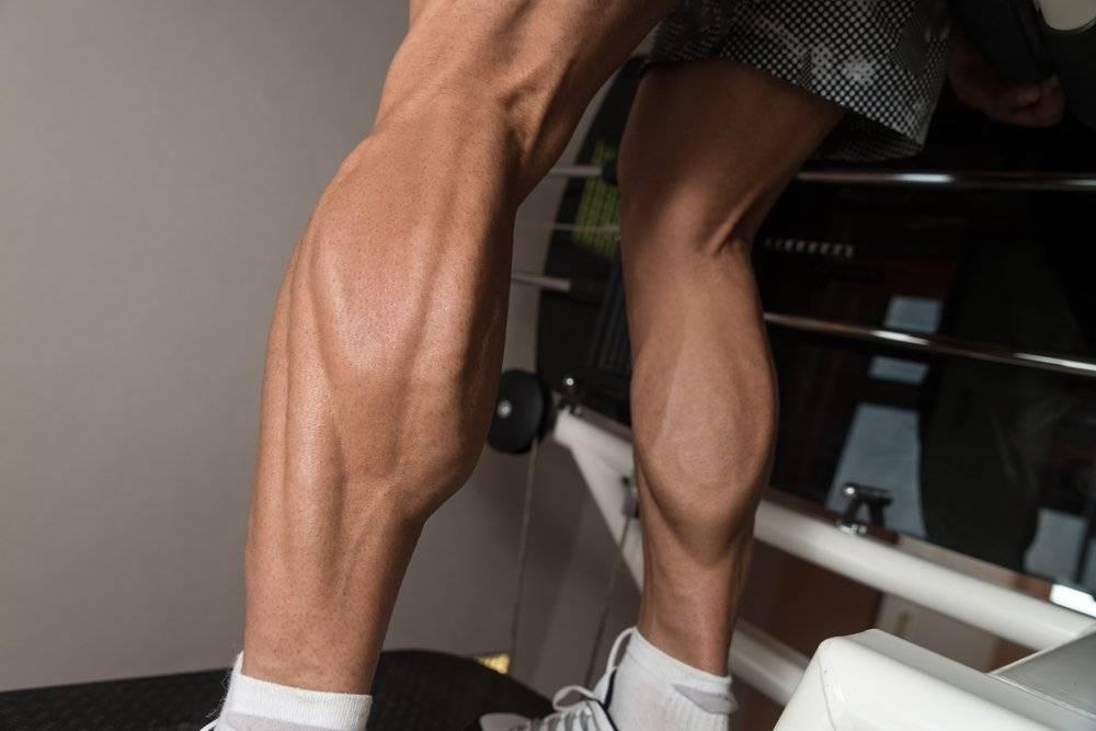 Икроножная мышца человека | анатомия икроножных мышц, строение, функции, картинки на eurolab