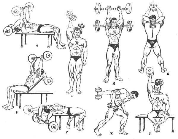 Самые лучшие упражнения на трицепс с гантелями