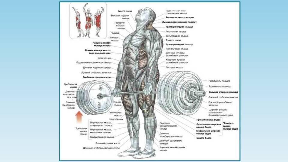 Программа тренировок со становой тягой, сколько раз в неделю делать упражнение