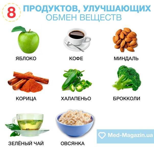 Главное о метаболизме и обмене веществ