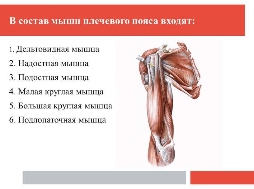 Плечевое сплетение — большая медицинская энциклопедия