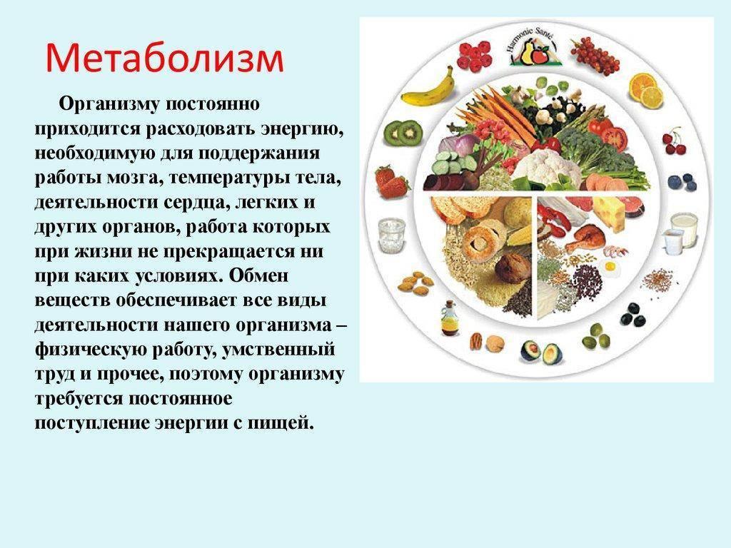 Метаболизм: что нужно знать,чтобы худеть – еда и фигура