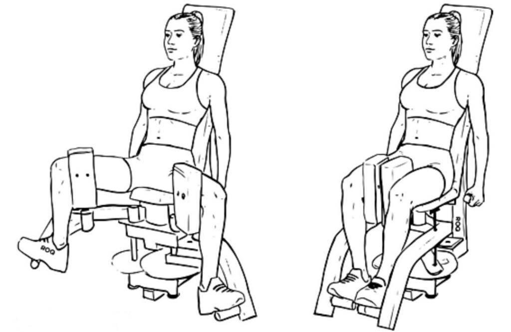Разведение ног в тренажере сидя: какие мышцы работают
